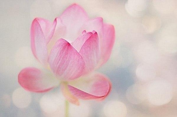 Картинки по запроÑу фото ум буддхи